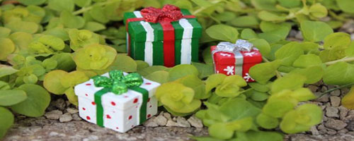 Gifts That Last